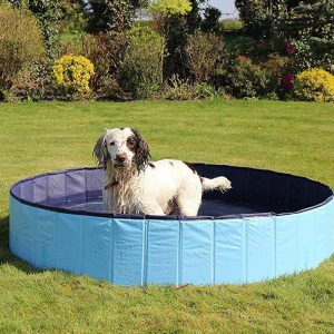 A cool dip for your dog