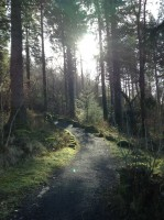 Coed y Brenin Forest Park