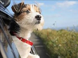 Pet Travel Abroad